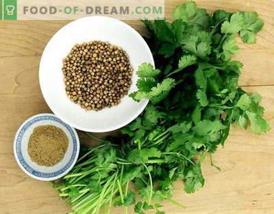 Coriander - descriere, proprietăți, utilizare în gătit. Rețete cu coriandru.