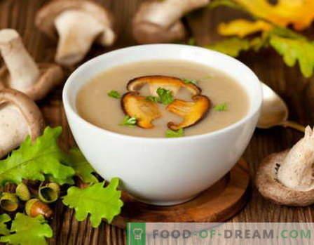 Sos de cremă cu ciuperci - cele mai bune rețete. Cum să gătiți bine și gustos sosul cremos cu ciuperci.