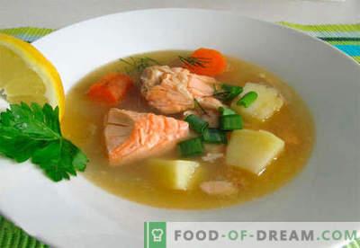 Supă de somon - cele mai bune rețete. Cum să gătești supa de somon corect și gustos.