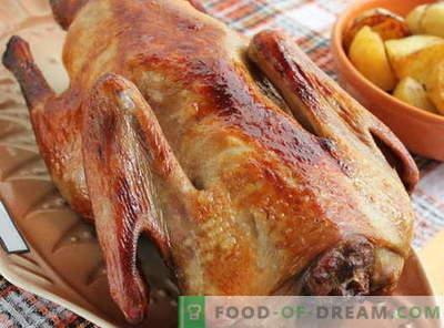 Duck copt în cuptor - cele mai bune retete. Cum să gătiți bine rață în cuptor.