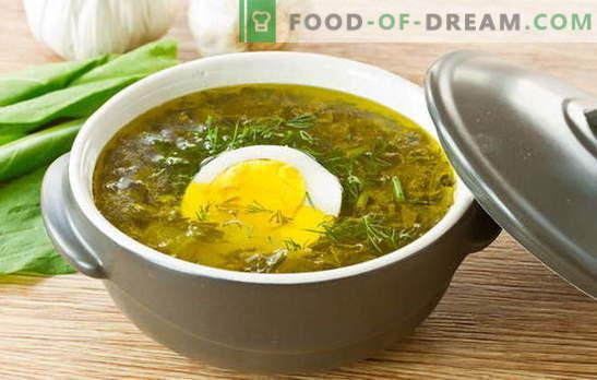 Supă de Sorrel - taxă de vară! Rețete pentru supă oxalică cu ou, chifteluțe, orez, pui, tocană