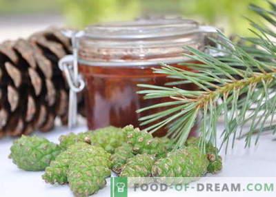 Gem de conuri de pin: cum să gătești în mod corespunzător