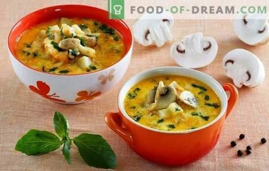 Soep met champignons en kaas - verwen je familie! Een selectie van de beste recepten voor soep met champignons en gesmolten kaas